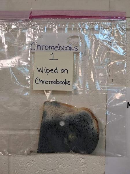 Imagem mostra uma fatia de pão de forma dentro de um saco plástico transparente que apresenta estar completamente tomada pelo bolor decorrente do toque no teclado de um chromebook.